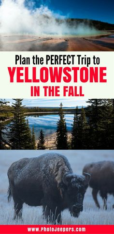 Imagine visiting Yellowstone National Park when the crowds are gone; animals exhibit interesting behaviors and create magical sounds; leaves and grasses turn yellow and orange; and no biting bugs to swat. It sounds magical and surreal doesn't it? You can experience Yellowstone National Park like that in the Fall. Here is some information, tips and personal experience on what to see and do in Yellowstone during Fall. You'll want to save this to your travel board to help you plan your trip.