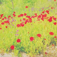 """Si, es una foto... Adro #vscocam #amapolas #primavera  #Galapagar #Madrid Playing around with #filters #color #poppies #spring"" Photo taken by @miriamelinvitado on Instagram, pinned via the InstaPin iOS App! http://www.instapinapp.com (05/15/2016)"
