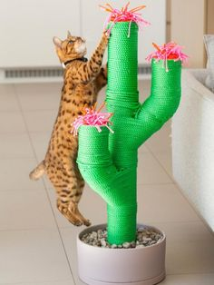 5 Fun and Quirky Pet Accessories For The HomeTop 5 Fun and Quirky Pet Accessories For The Home Cat Lion Head Pet Funny Headgear Online Shop [MPK Store] 10 Meter Sisal Rope of diameter, For Cat Tree, Cat Toy Cool Cat Trees, Cool Cats, Cat Care Tips, Pet Care, Cat Perch, Cat Scratching Post, Cat Room, Find Pets, Cat Furniture