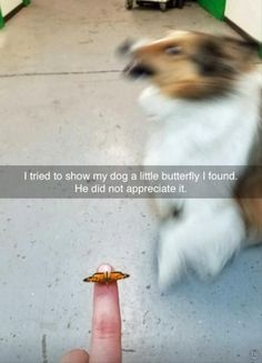 Funny Animal Picture Dump Of The Day 23 Pics #funnydogshaming