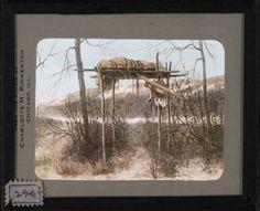 Grave on platform in tree]  McClintock, Walter, 1870-1949.