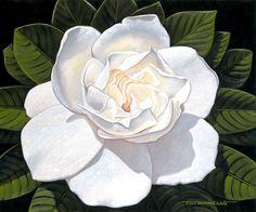 Gardenia - Brian Marshall White