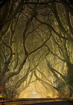 The Dark Hedges in the early morning, near Stranocum, Northern Ireland