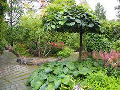 elämää ja elämyksiä: avoimet puutarhat, osa 2 Pilven piirtämä