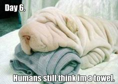We love cute pictures of cats, dogs, horses, pigs, cows, lions, and tigers, and bears… OH MY!  #dogs #dpgys #dogysmag