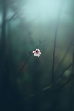 Photography ideas and inspiration - Beautiful, single, pink forest flower. Short depth of field makes this image look dreamy. I love the color of the green blurry background. Beautiful World, Beautiful Places, Simply Beautiful, All Nature, Flowers Nature, Forest Flowers, Jolie Photo, Pretty Pictures, Nature Photography