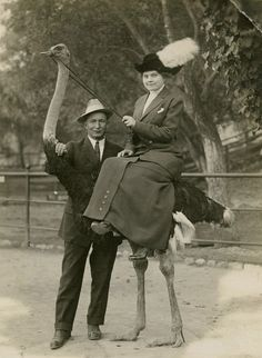 A fantastic photo postcard of an elegantly dressed woman riding an ostrich at the Cawston Ostrich Farm in California. by oldrose Vintage Pictures, Vintage Images, Photo Vintage, Perfect World, Photo Postcards, Weird And Wonderful, Vintage Photographs, White Photography, Retro Photography