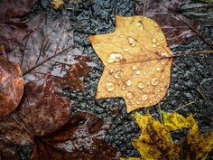 Tips for Photographing Autumn Colors Tree Photography, Digital Photography, Photography Tips, Photography Tutorials, Night Skies, Autumn Leaves, Fall Decor, Cool Pictures, Autumn Colours