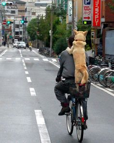 A dog riding the bicycle by Takato Marui, Osaka, Japan- I told my dog we  are thou g to start bike riding together, I have a feeling this is what he  had ... 536e572ff1