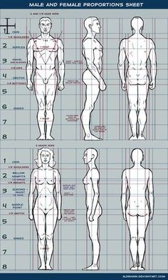 Male and female proportions sheet by Aldriann