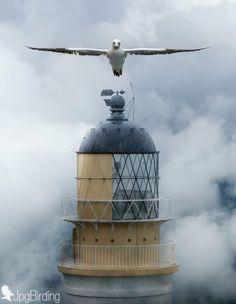 Bass Rock Lighthouse by jose pesquero