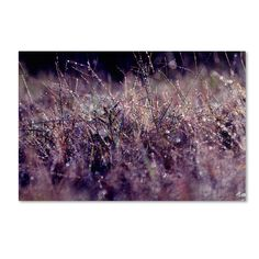 Found it at Wayfair - 'Rain' by Beata Czyzowska Young Photographic Print on Wrapped Canvas