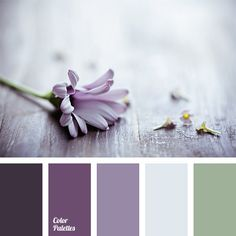 Purple daisy tones palette by Design Seeds - but without the mustard yellow