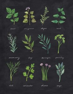 rachaelhorner: Painting and cutting out various herbs for this illustration was very fun. I have to say though, the dill was a bit fiddly with scissors.