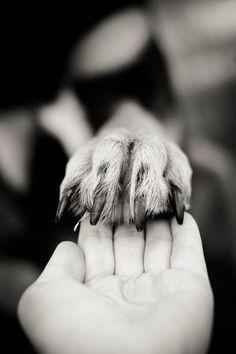 dog stuff,dog ideas,dog care,dog tips,dog grooming Photos With Dog, Dog Pictures, Animal Photography, Photography Poses, People Photography, Family Pet Photography, Human Photography, Digital Photography, Dogs Tumblr