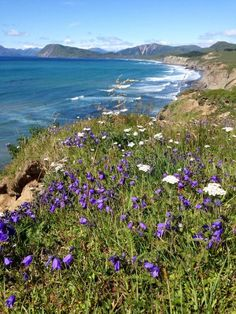 Pasagshak, Kodiak You can walk for miles, have a picnic on th ebeach and watch the waves and wild horses on the beach.no where else like this on Earth Kodiak Alaska, Alaska Tours, Kodiak Island, Family Travel, Family Trips, Living In Alaska, Fauna, Wild Horses, Mother Nature