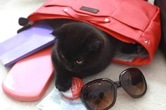 Cash is really having fun with the bagINbag! Maybe she's also jealous of me being beautifully organized? Jealous, Sunglasses Case, Have Fun, Kitty, In This Moment, Beauty, Beleza, Kitten, Kitty Cats