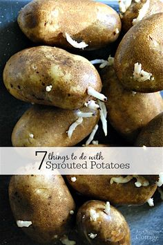 7 Things to do with sprouted potatoes- and throwing them out isn't one of them!