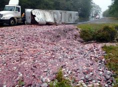 "A semi truck carrying a load of chopped dead fish spilled Friday morning, spilling the seafood guts across northbound lanes of state Route 101.    The thousands of fish heads on the road near Ilwaco, Wash...State Patrol Trooper Russ Winger wrote...""Law enforcement can be quite glamorous."""