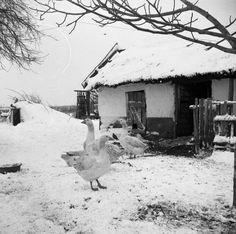 Falusi életkép. 1970 Old Pictures, Old Photos, Old Photography, Central Europe, Folk Music, Winter Landscape, Historical Photos, Art Inspo, Past