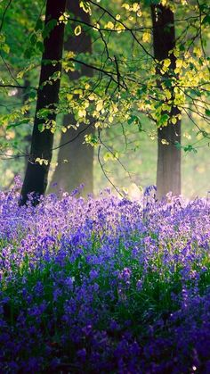 Trees & bluebells in spring's sunshine & shade by Veluchamy Thangavel Image Nature, All Nature, Amazing Nature, Beautiful World, Beautiful Places, Beautiful Forest, Magical Forest, Simply Beautiful, Landscape Photography