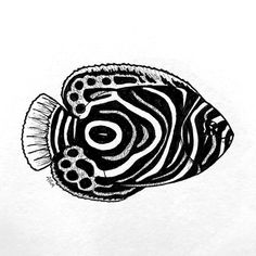 "Inktober ""Pattern"" Emperor Angelfish by Abigail Anklam Gila Monster, Monster 2, Tarantula Hawk, Kangaroo Rat, Ground Squirrel, Angelfish, Draw Something, Emperor, Inktober"