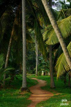 Beautiful Sri Lanka.