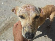 Neglected: Pet owners are struggling to cover the costs of keeping their dogs and are abandoning them Kindness To Animals, Human Kindness, Dentist In, Four Legged, Beautiful Creatures, Animal Rescue, Abandoned, Shelter, Greece