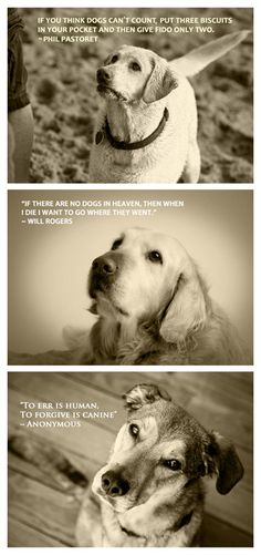 Quotable Canine Collection  Three 5 x 7 Prints by MarkJAsher, $35.00