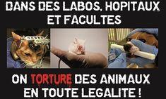 Pétition : Pour l'abandon du projet d'animalerie à des fins de recherche médicale et pour le développement des méthodes substitutives à l'expérimentation animale au pôle santé de Nancy Brabois