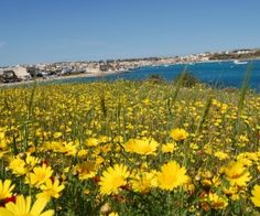 Spring is coming to Malta