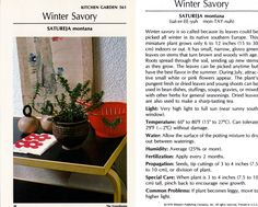 about Winter Savory Winter Savory, Montana Winter, Miniature Plants, Medicinal Plants, Herbal Remedies, Herbalism, Seeds, Essential Oils, Spices