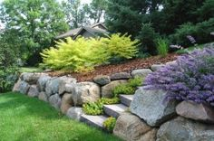 Boulder walls designed with colorful bank of Tiger Eyes Sumac, Nepeta and ground covers