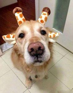 Köpekler Hakkında Herşey | via Facebook