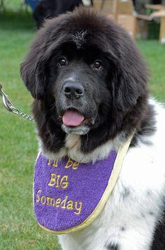 #puppy bib!