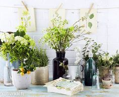 Puutarha sisälle   Kotivinkki Planting Flowers, Anna, Plants, Plant, Planets