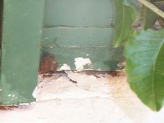 Bee removal in Johannesburg , removed wasp nest in Roedean School SA, Parktown