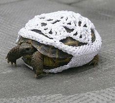 Funky retro tortoise crochet jacket. The cute is overwhelming I can't stand it!