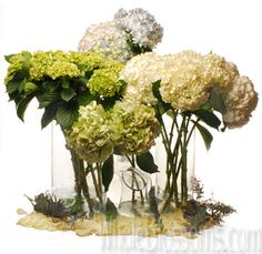 Our wholesale Green Hydrangea flowers, coming in a lime shade, consist of small countless blooms. We offers fresh cut flowers direct from the farm. Flower Arrangements Delivery, Beautiful Flower Arrangements, Most Beautiful Flowers, Wedding Flower Arrangements, Flower Centerpieces, Green Carnation, Green Hydrangea, Hydrangea Flower, White Hydrangeas