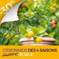 Bergenia - Vivace couvre-sol à feuillage persistant, doté d'une grande longévité Permaculture, Herbs, Plants, Garden, Floral