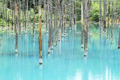 青い池は1988年12月に噴火した十勝岳の堆積物による火山泥流災害を防ぐため、美瑛川本流に複数建設された堰堤のひとつに水が溜まって偶然に出来た人工池なのです。なので名前もなく、訪れた人が「青い池」と呼んでいるのが定着しました。
