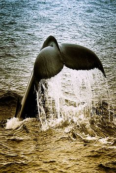 Whale Going Under