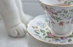 Cats and Tea