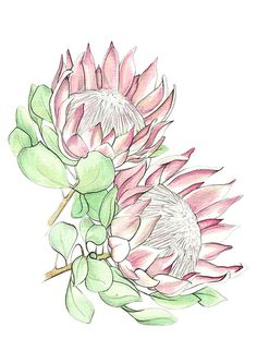 King Protea greeting card illustration by VctoriaVctoria on Etsy - Modern Flor Protea, Protea Art, Protea Flower, Watercolor Print, Watercolor Flowers, King Protea, Australian Native Flowers, Art Sketchbook, Fabric Painting
