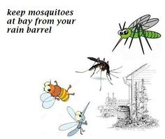 to get rid of mosquitoes how to keep mosquitoes away from rain barrel