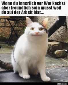 """Lustige Bilder, …"""">If you cook with anger but have to be friendly . Funny pictures, sayings, jokes, really funny Characteristic of The Pin: Wenn du innerlich vor Wut kochst aber freundlich sein musst. Funny Animal Memes, Stupid Funny Memes, Cute Funny Animals, Funny Relatable Memes, Funny Dogs, Hilarious, Funny Quotes, Cute Animal Humor, Sarcastic Memes"""