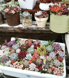 Суккуленты - цветы пустыни Growing Succulents, Succulents In Containers, Cacti And Succulents, Planting Succulents, Planting Flowers, Air Plants, Garden Plants, Indoor Plants, House Plants