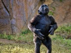 Baby Gorilla from San Diego Zoo