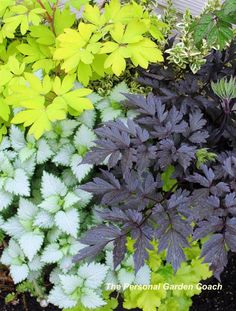 http://fine-foliage.com/2013/03/19/focusing-in-the-dark/