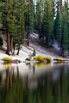 Forest Reflections. Mammoth Lakes, Eastern Sierra, California.